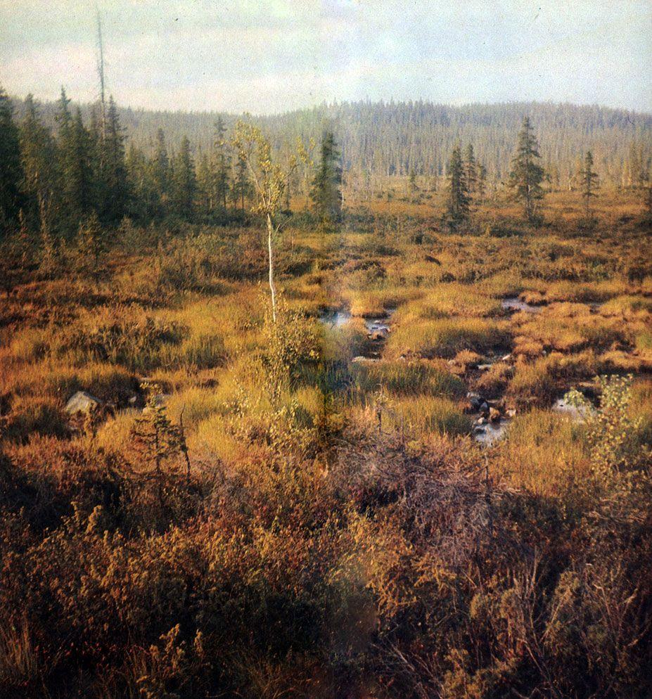 Taiga Russia Boreal Forest Forest Falls Fantasy Landscape