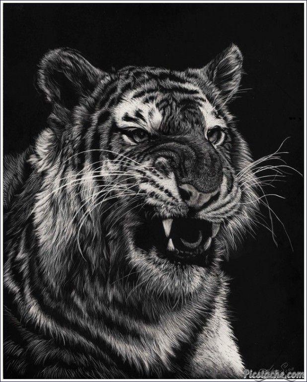 Growling Tiger