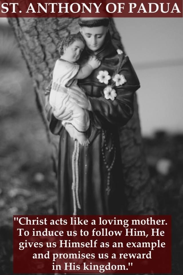 Pin By Dee Federicci Baga On Saints Saint Quotes Catholic Saint Anthony Of Padua Catholic Saints