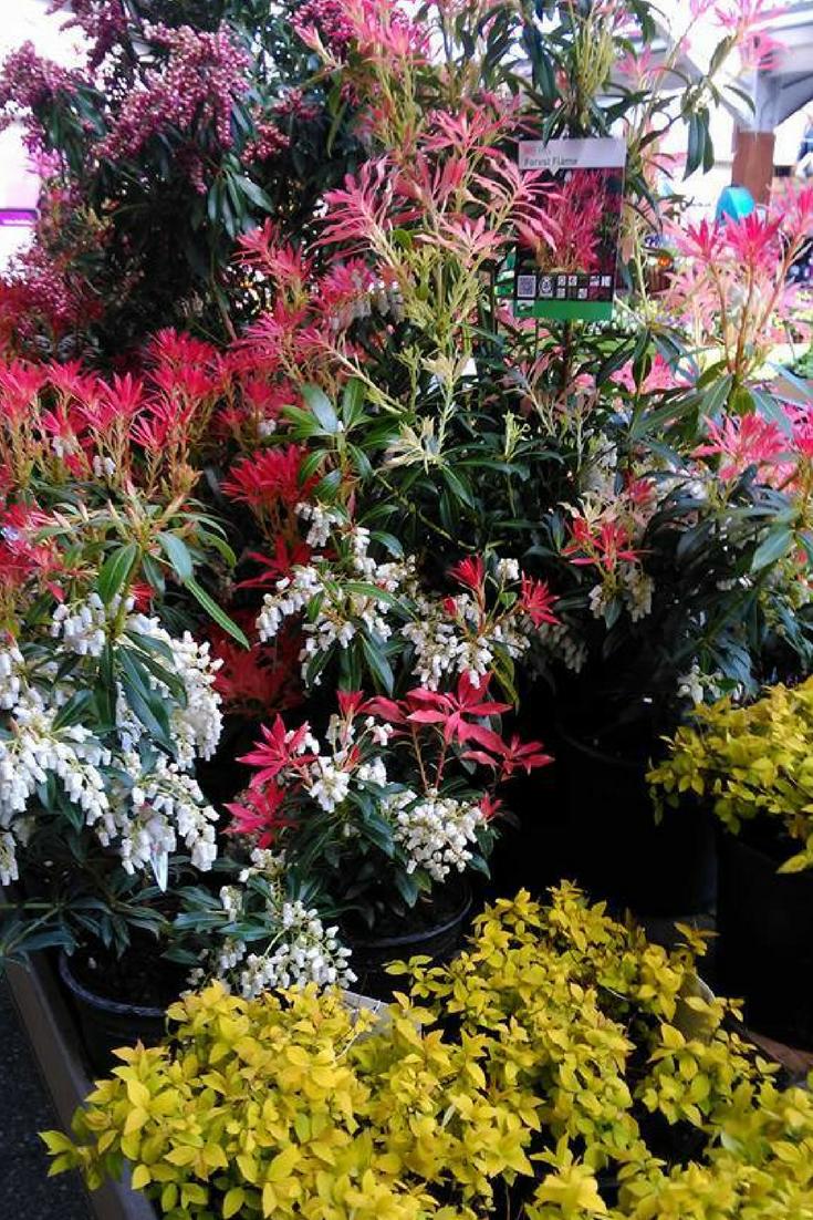 Beautiful Arangement Of Plants At Horkans Turlough Plants All Plants Climbing Plants