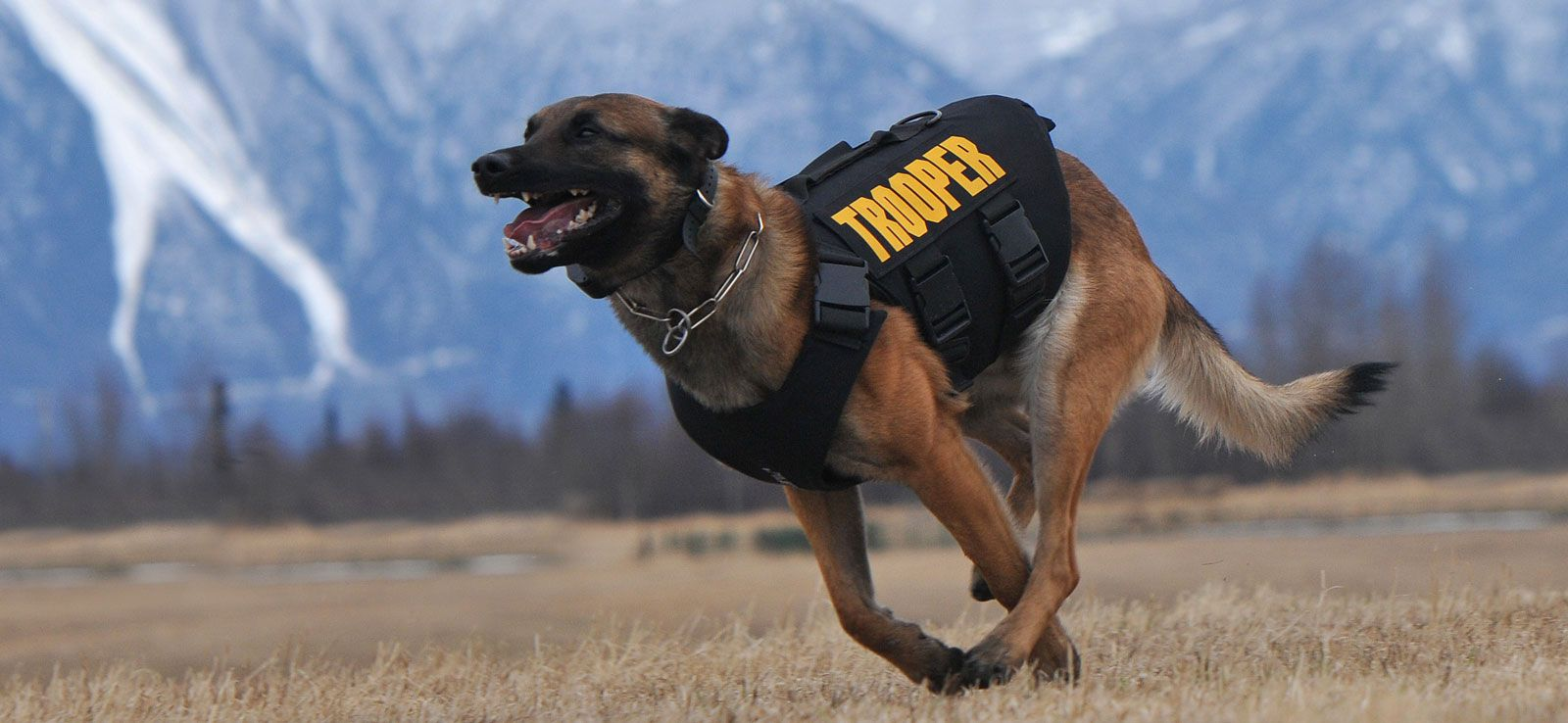 Vested Interest In K9s Inc Ways To Support Supportive Police Dogs All Hero