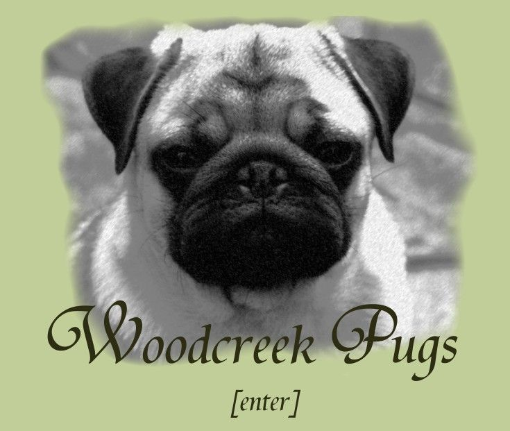 Woodcreek Pugs Wa Pet Daycare Pug Puppies Pugs For Sale