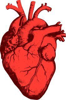 Coeur Humain Coeur Humain Dessin Cœur Humain Coeur Organe