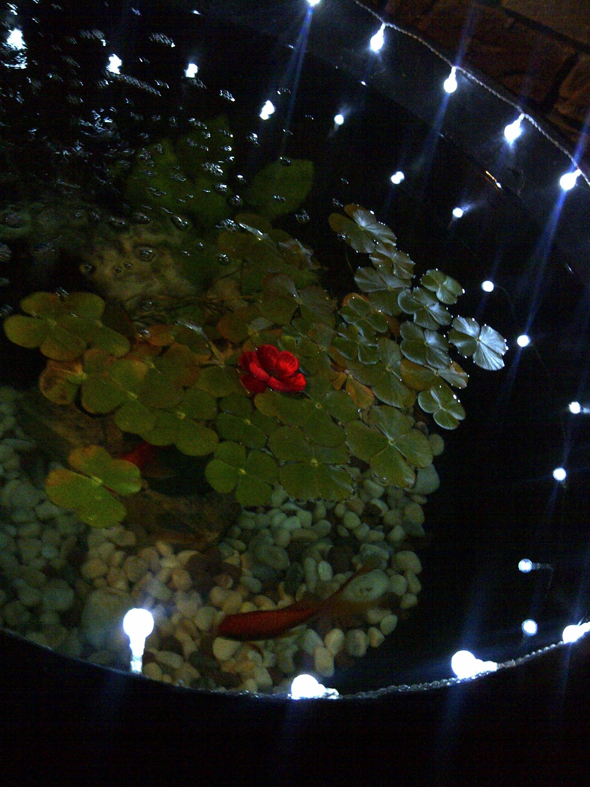D i y fish pond made from a pool sand filter cut in half for Koi pond sand filter