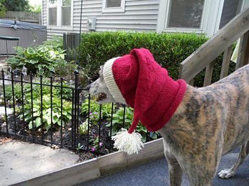 Ravelry Pointy Greyhound Hood Pattern By Nikki Atkins Crochet Dog Hat Dog Snood Crochet Dog