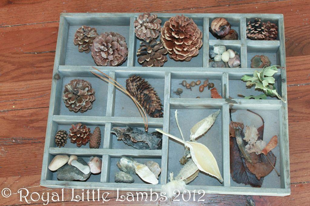 nature box from hobby lobby via royallillambs nature study nature display pinterest. Black Bedroom Furniture Sets. Home Design Ideas