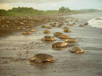 Tortoguaro National Park in Costa Rica.