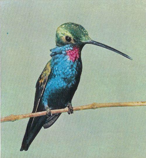 Vintage National Geographic Scans | Weird animals, Bird ...