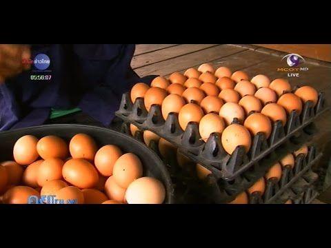 เกษตรทำเง น ไก ไข ออร แกน ก เล ยงหล งบ านต นท นต ำ Youtube การเล ยงไก