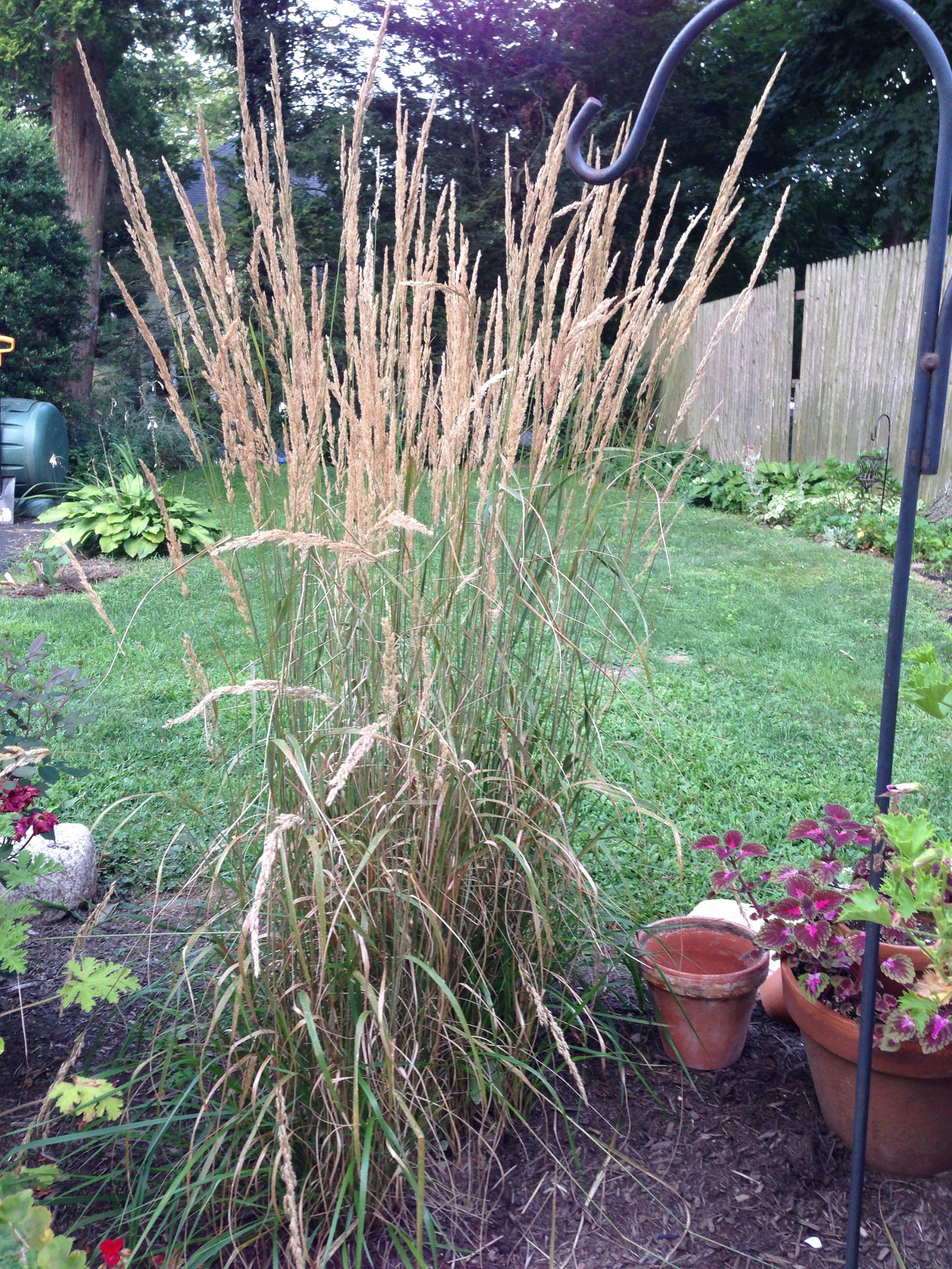 Karl Forster Grass Herbs Grass Garden