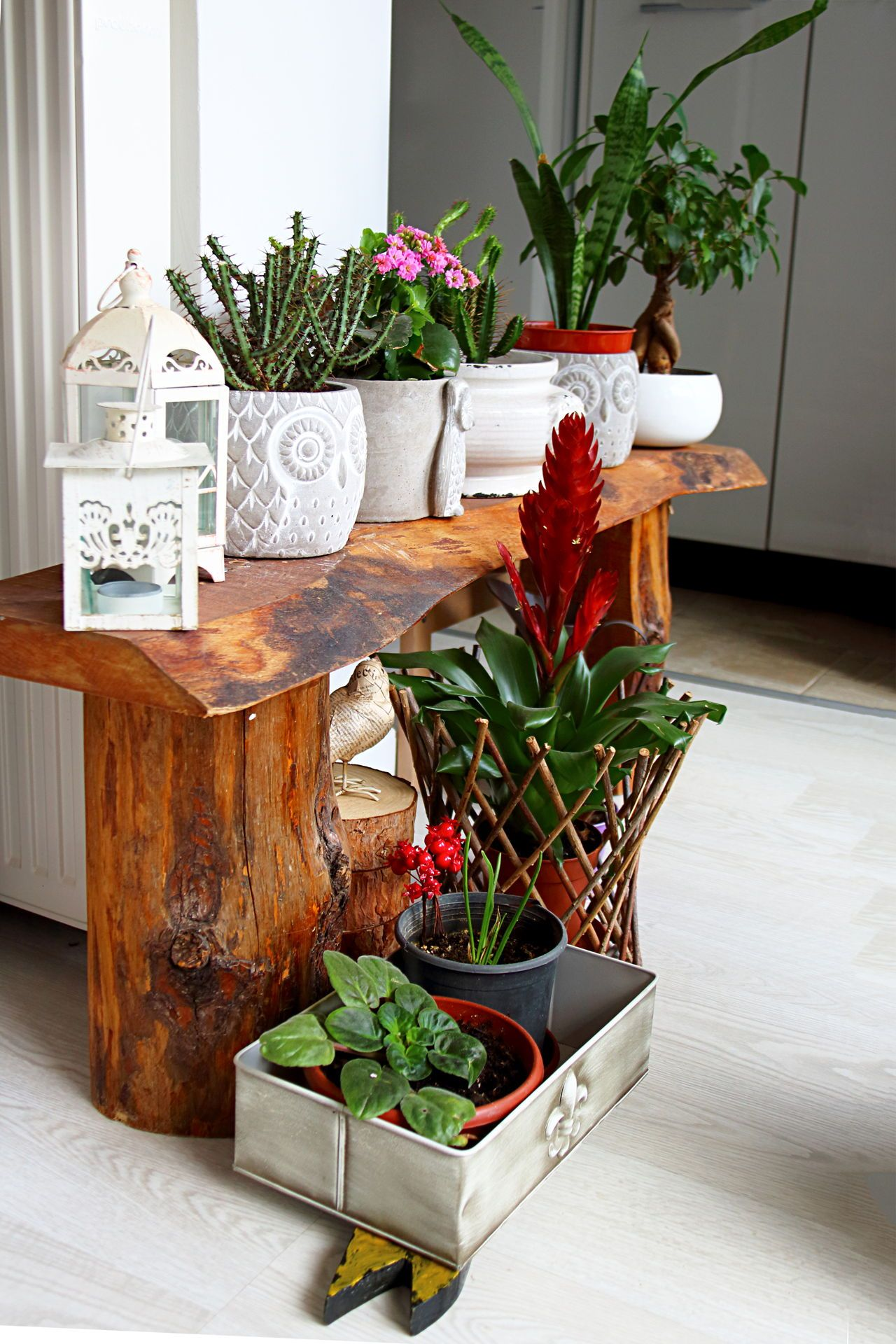 Dress Up Your Home With These Indoor Plants That Don't