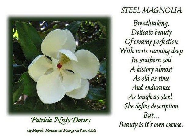 Southern Poems Mississippi Poems Country Life Poems Magnolia Poems