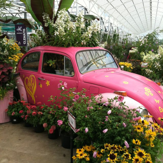 Old VW Bug At Petitti Garden Center In Avon, OH. I Had To