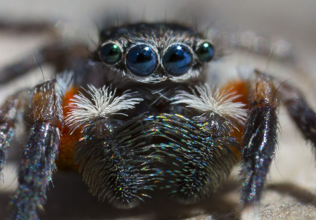 9450 Jotus arrives | Spiders & Scorpions | Pinterest | Spider ...