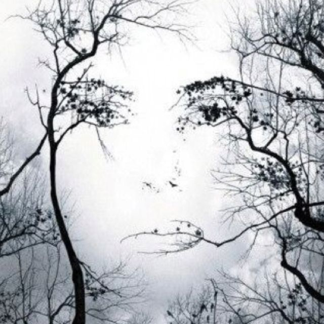 Face Tree FacesDo YouOptical Illusions