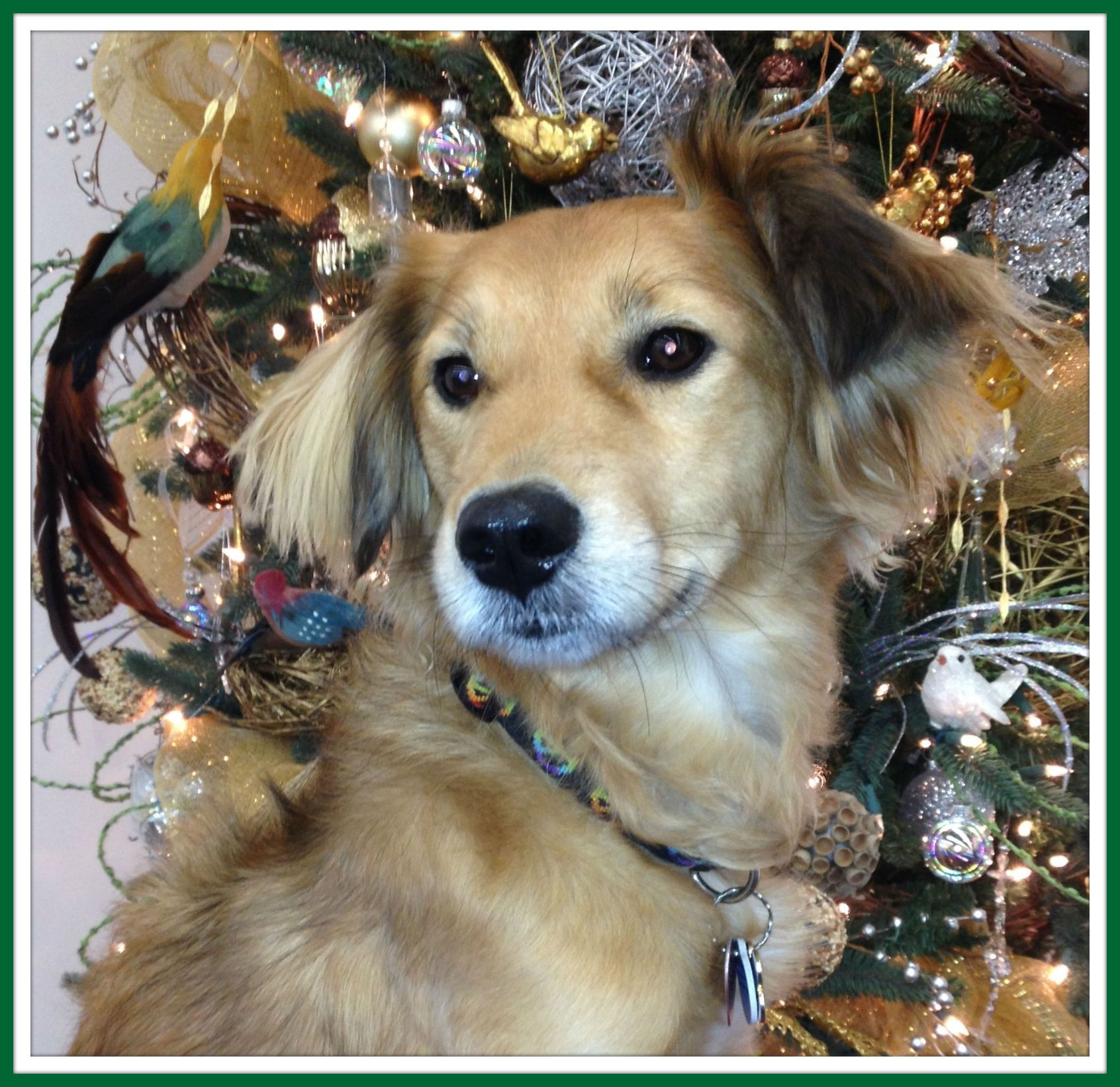 We are open for adoptions December 22 and 23 from 11 a.m. to 7 p.m.; December 24 from 11 a.m. to 2 p.m.; December 25 Closed; December 26 from 11 a.m. to 6 p.m. and December 27 and 28 from 10 a.m. to 6 p.m. www.HoustonSPCA.org