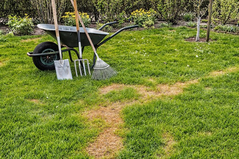 Top Spring Lawn Care Tips Lawn care tips, Spring lawn