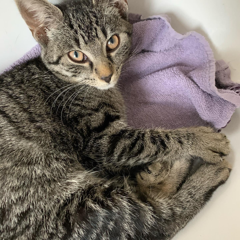 Pippi Liegt Wahnsinnig Gern Im Waschbecken Aber Auch Der Badezimmer Fussboden Ist Ganz Okay Als Schlafplatz Wenn Man Vorher Ein Paa In 2020 Beautiful Cats Cats Animals