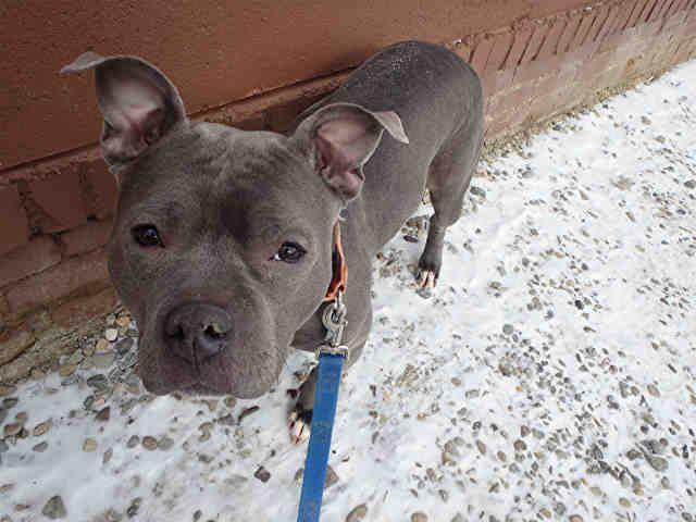 Nala Sweetheart Pittsburgh Pa Petharbor Com Animal Shelter
