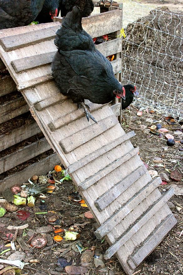 How to Keep Chickens Happy in Winter (from AbundantPermaculture). Excellent, thorough, well organized, and detailed, this article covers more than just winter care. It's really useful for keeping chickens happy at any time of year.