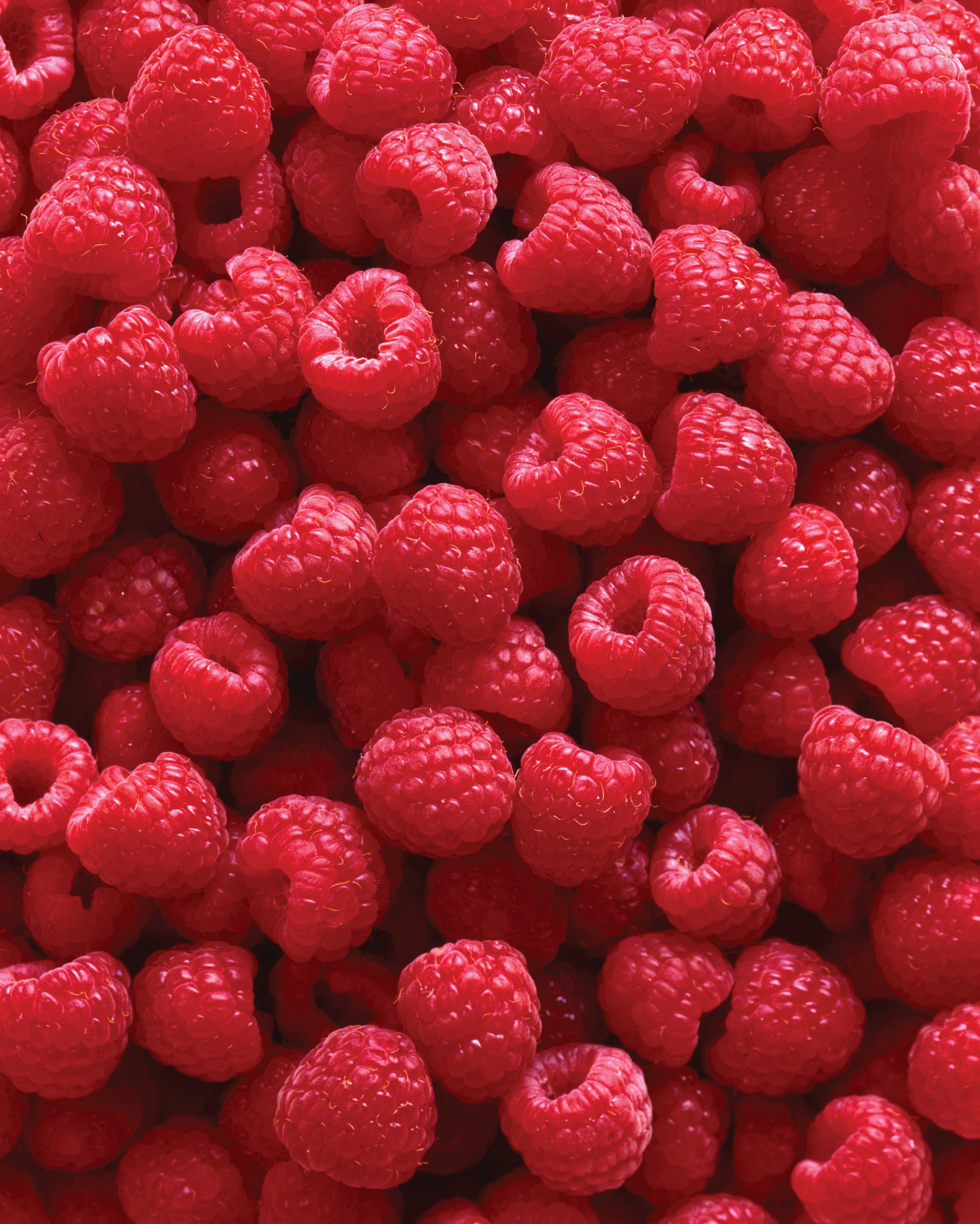 Long-time love of luscious berries becomes a family project in growing raspberries.