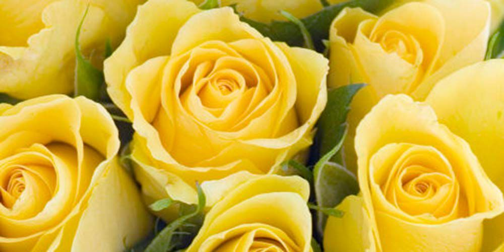 12 Flowers With Hidden Meanings Yellow Rose Bouquet Rose Color Meanings Yellow Roses