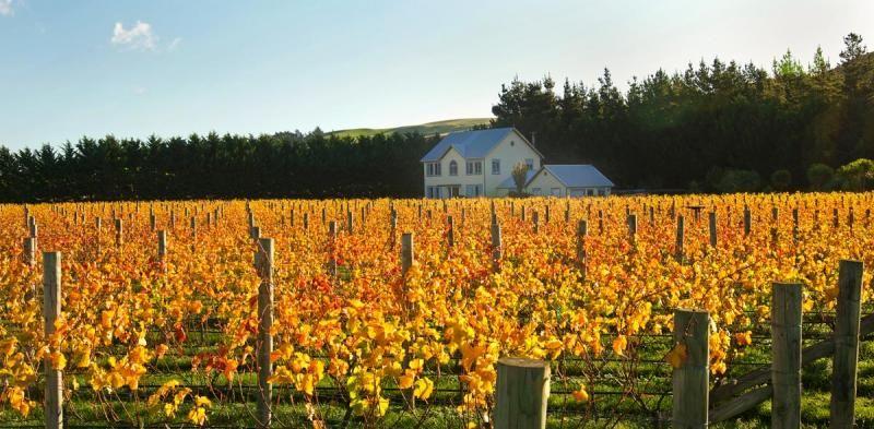 Wineries Vineyards For Sale Wine Jobs Wine Equipment For Sale Bulk Wine And Grapes For Sale Wine Real Estate Vineyard Wine Jobs Bulk Wine