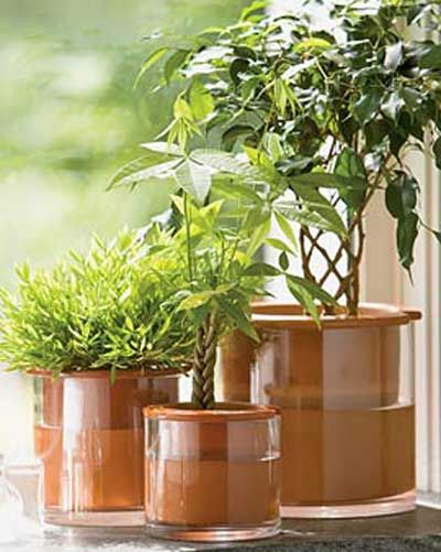 Self Watering Pot Consists Of A Clear Gl Outer That Gets Filled With Water And Porous Clay Inner The Concept Is Plant Absorbs