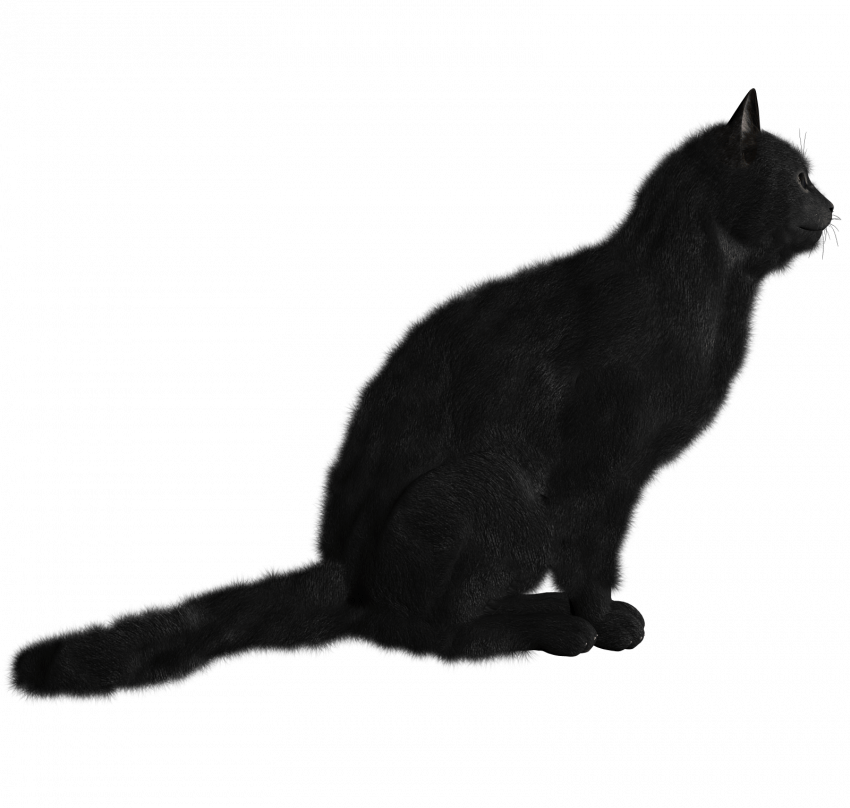 Black Cat Png Transparent Image Cat Png File Download Black Cat Pngget To Download Free Black Cat Png Vector Photo In Hd Quality W In 2020 Image Cat Cats Black Cat