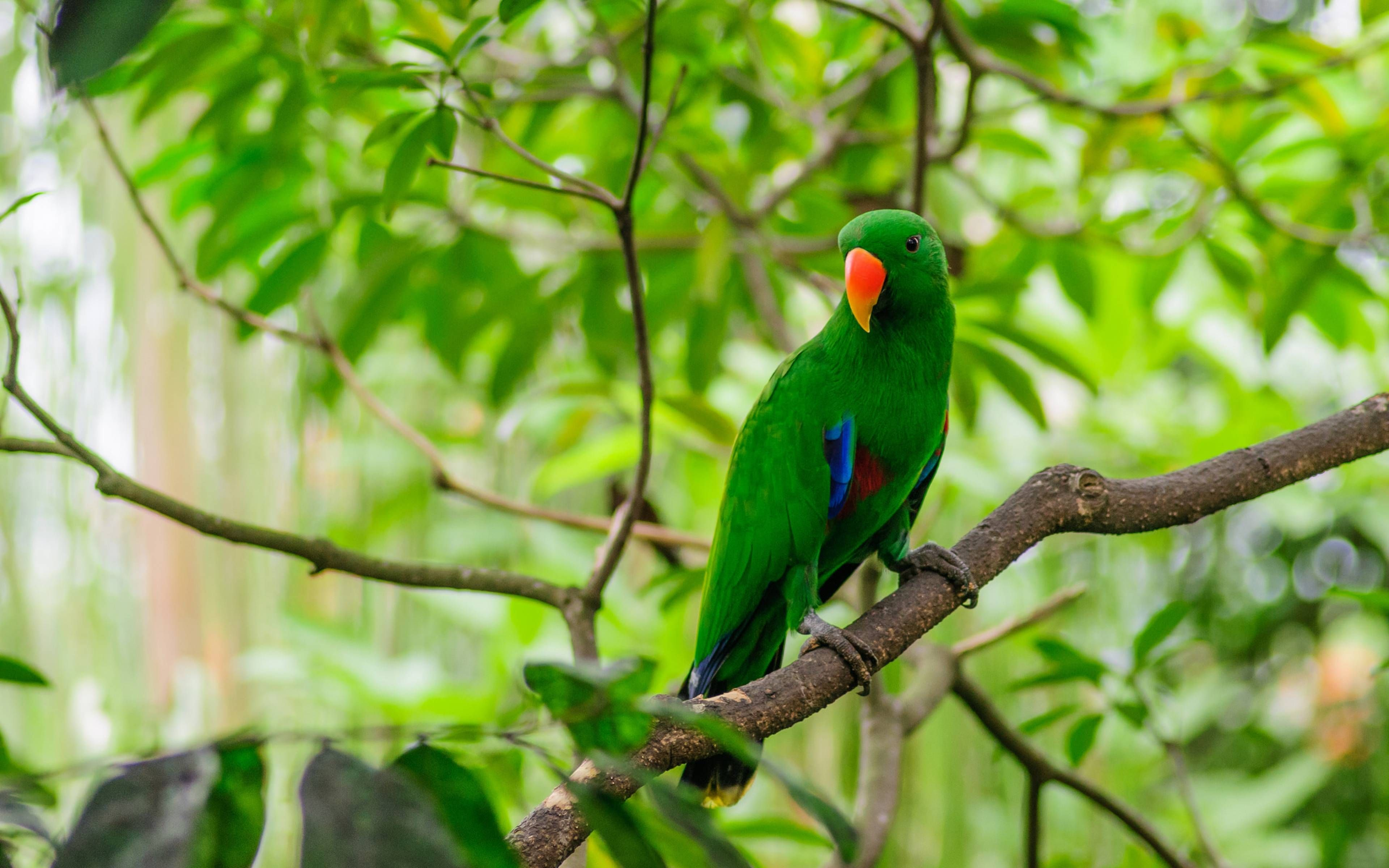 Green Parrot Sitting On The Branch Of A Tree 3840 X 2400 Wallpaper Parrot Image Bird Pictures Funny Animal Memes