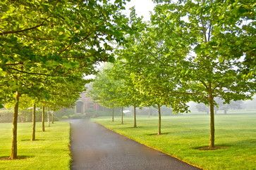 Tree Lined Driveway Design Ideas Pictures Remodel And Decor Tree Lined Driveway London Plane Tree Driveway Design