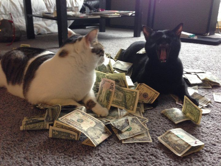 Cats Rule Everything Around Me (C.R.E.A.M.) - credit to: swipurr.com