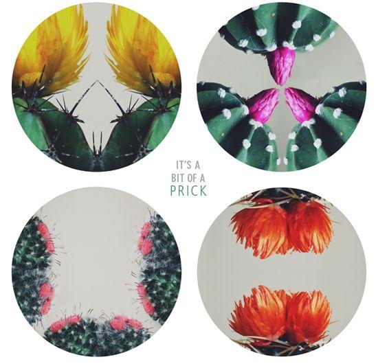 color composition study of cactus flowers design. Black Bedroom Furniture Sets. Home Design Ideas
