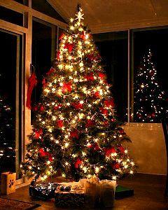 Best Decorated Christmas Trees | Christmas Trees UK Grown U0026 Cut Fresh To  Order