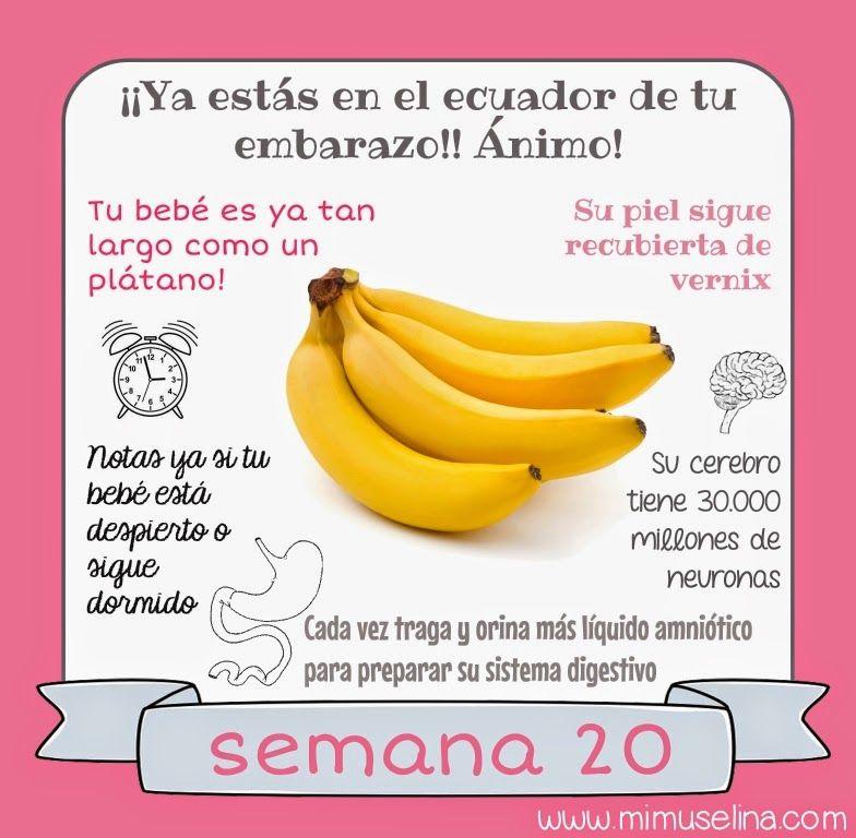 f94007e45 BebeBlog by mimuselina  Semana 20 embarazo. Tamaño y evolución del bebé   mimuselina