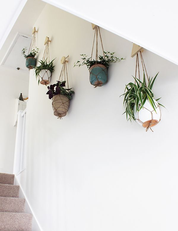 Wall of hanging planters growing spaces