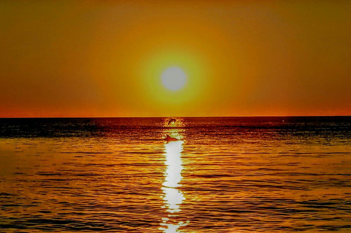 """Daniel Storm en Twitter: """"@StormHour Dolphin and Bird sunset at sunset park florida https://t.co/E6zU0jASQQ"""""""