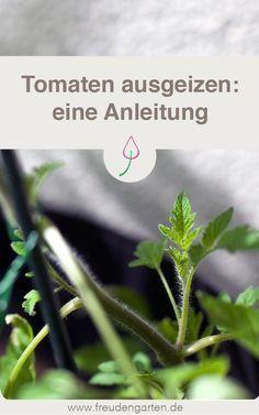 Tomaten ausgeizen #tomatenpflanzen