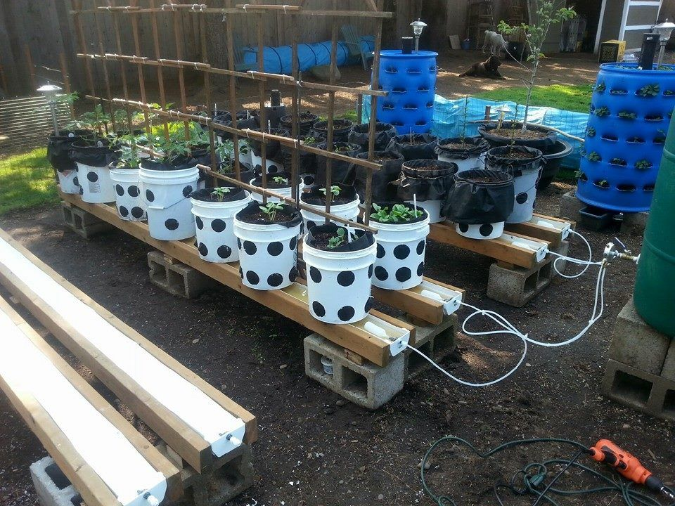 Security Check Required Grow System Aquaponics Gutter Garden