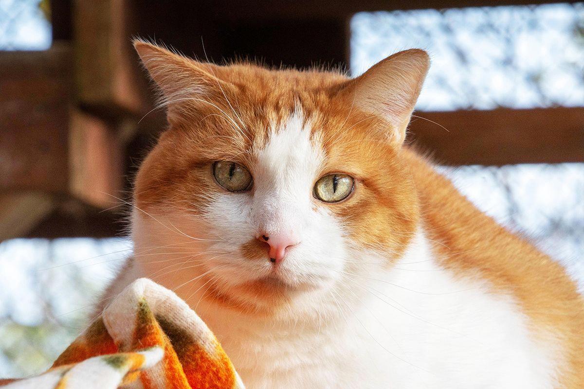 Cats On Catnip DoCatsGetColds Post4680917658 Catsuit