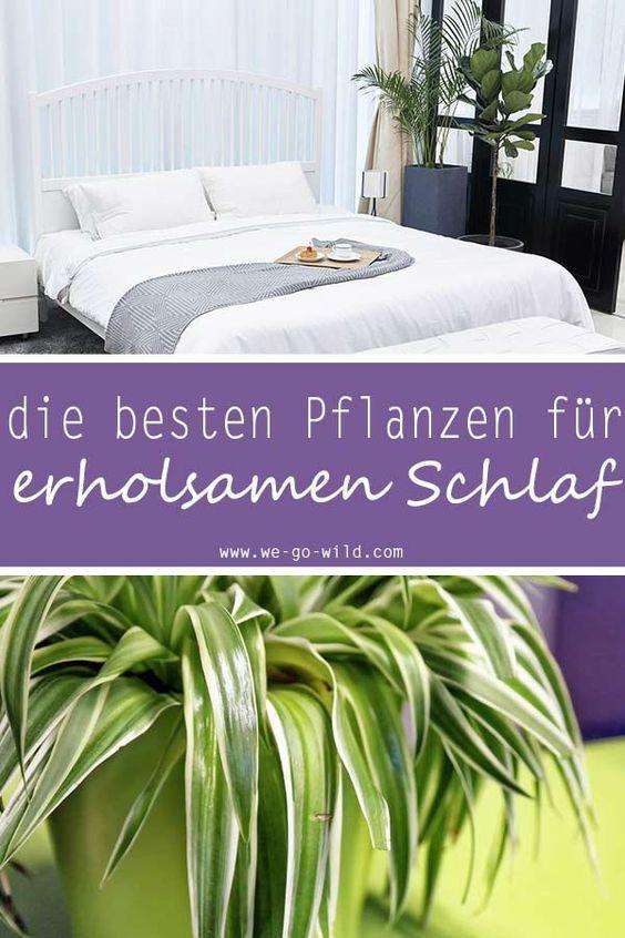 Pflanzen im Schlafzimmer - 9 Luftreiniger helfen beim ...