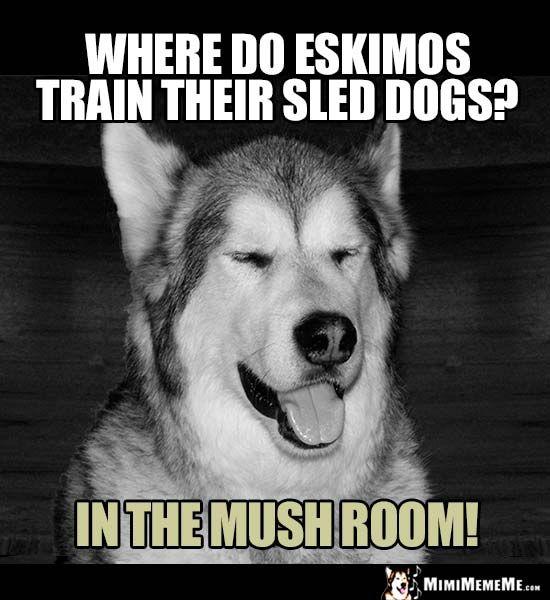 Dog Joke Where Do Eskimos Train Their Sled Dogs In The Mush Room