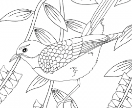 Free colouring sheet + article about my book Wildscapes & my PhD in illustration
