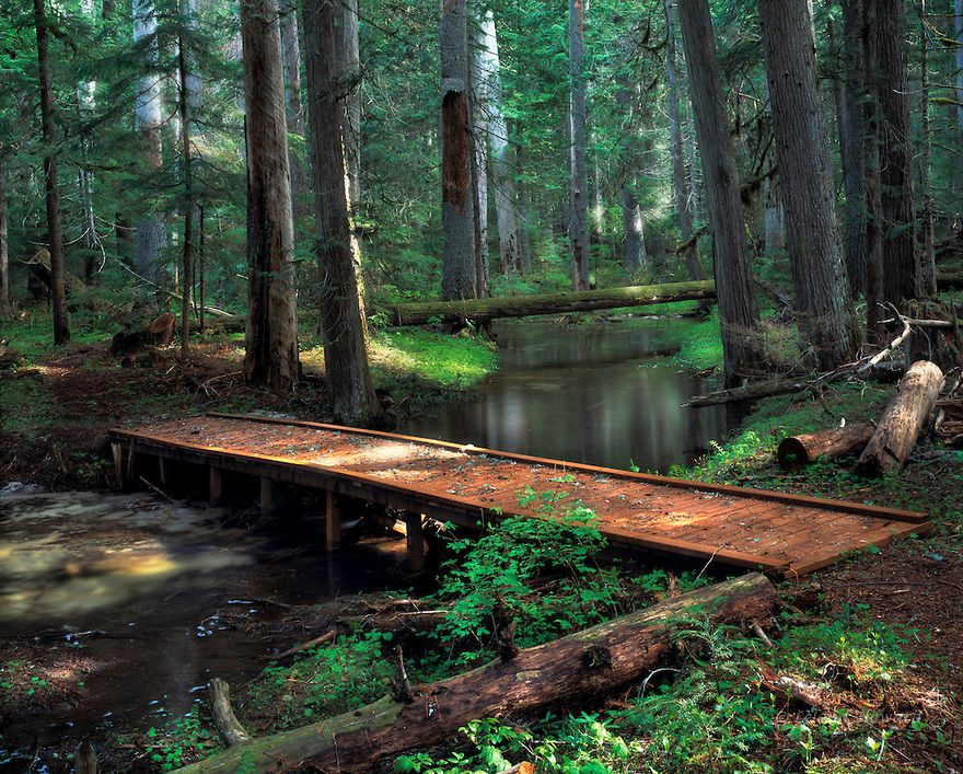 Idaho North Foot Bridge In Old Growth Forest In Lions