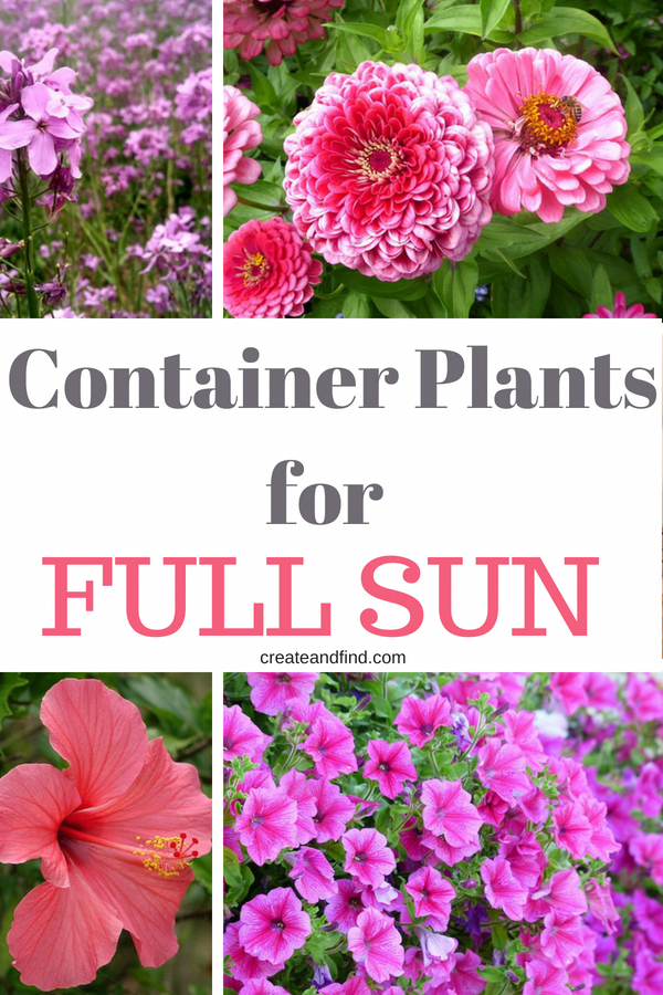 8 Sun Loving Plants For Containers Plant These In Your Hanging Baskets Or Gard Baskets Containers Gard Sonnenpflanzen Pflanzen Blumen Im Blumentopf