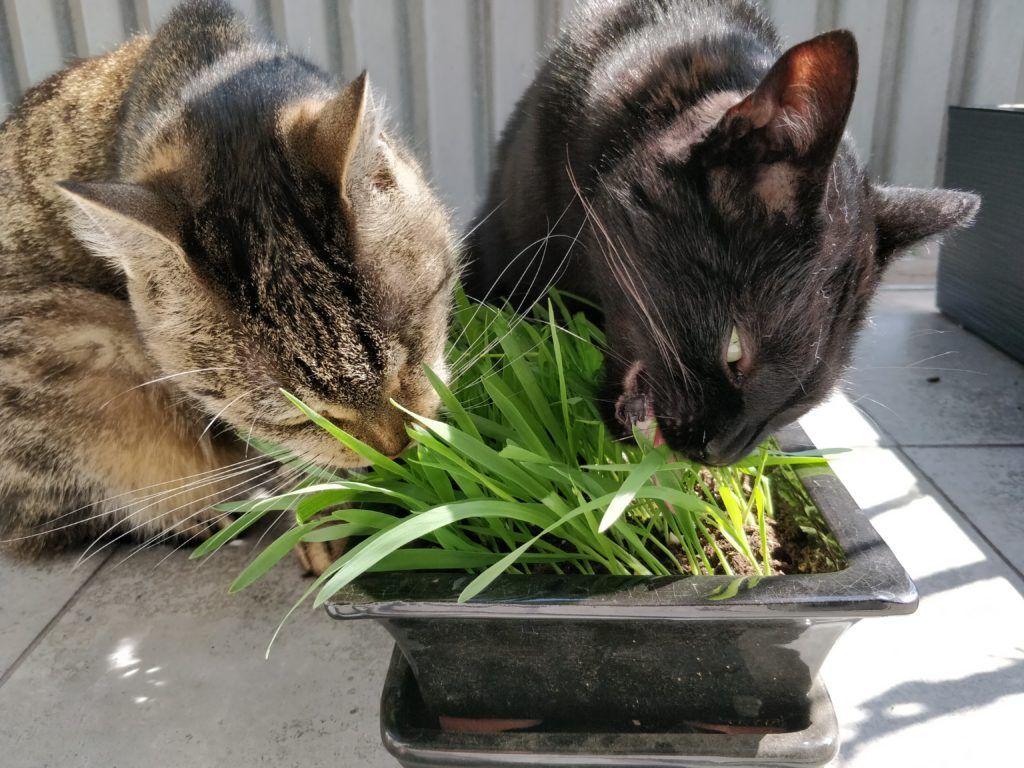 Kot I Rosliny Czy To Sie Moze Udac Catexperts Cats Animals