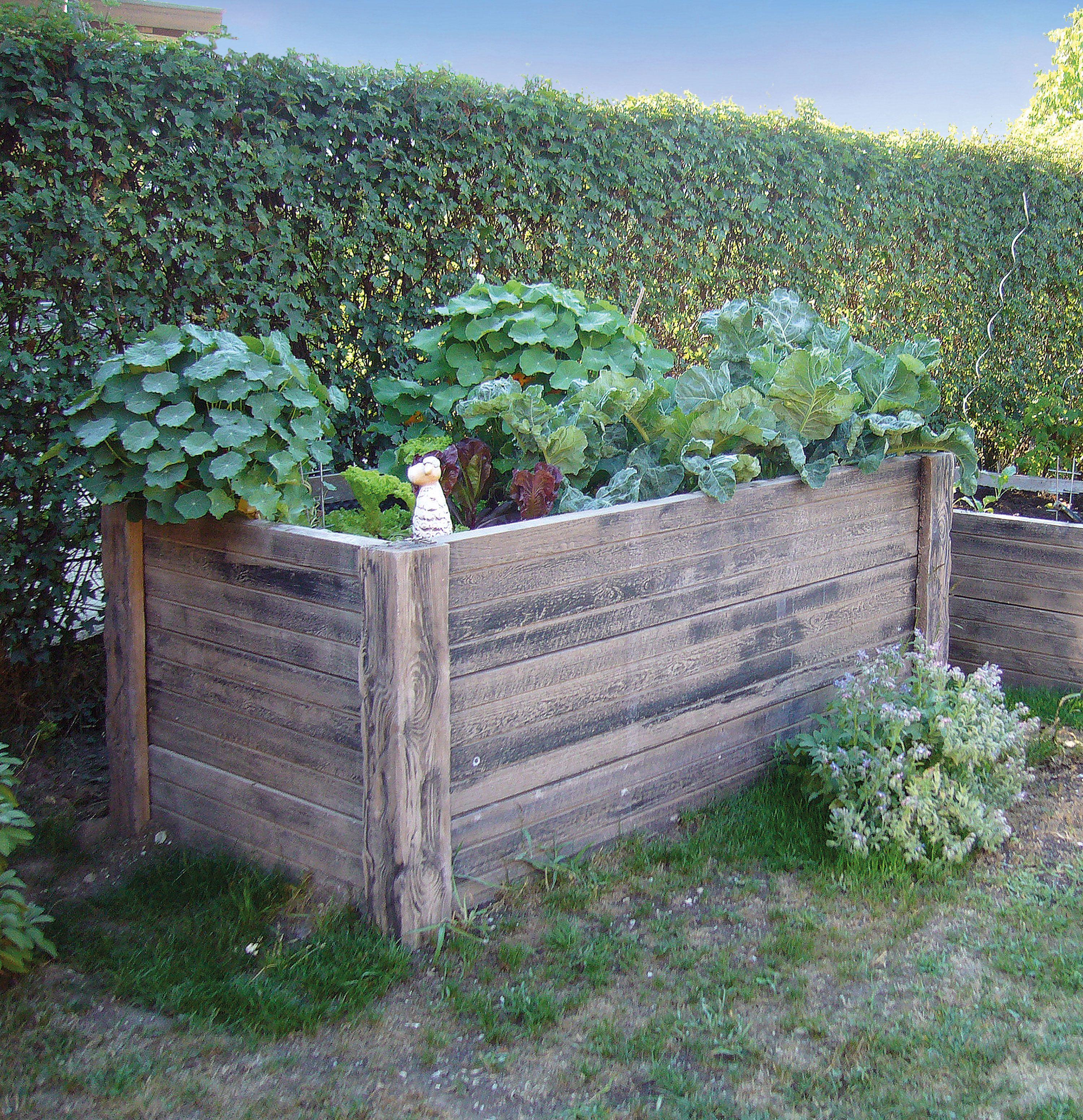 Hochbeet Aus Versteinertem Holz Hochbeet Versteinertes Holz Gartenmauern