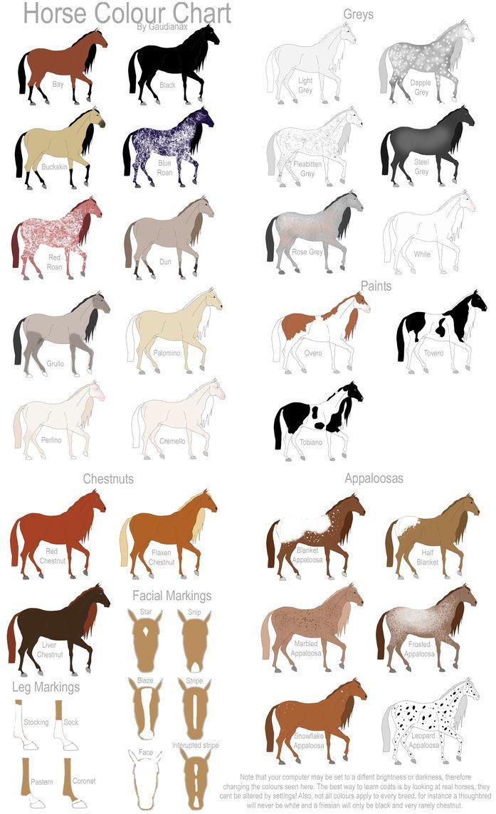 Equine coat color horse colour chart by gaurdianax on deviantart also rh pinterest