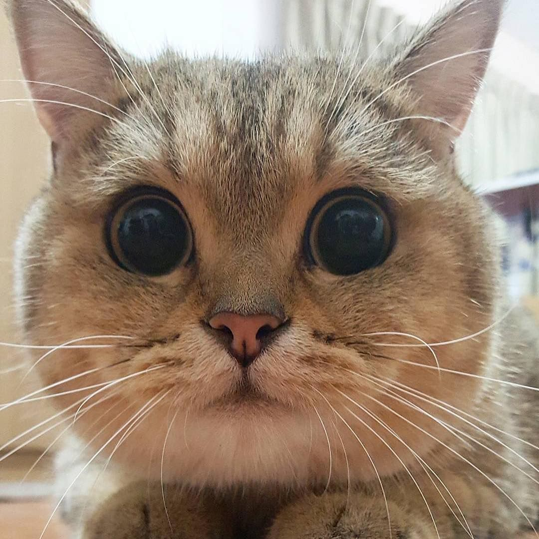 Oooooo what BiG eyes you have (With images) Pretty cats