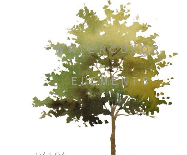 Watercolor Elements For Architectural Presentations Tree